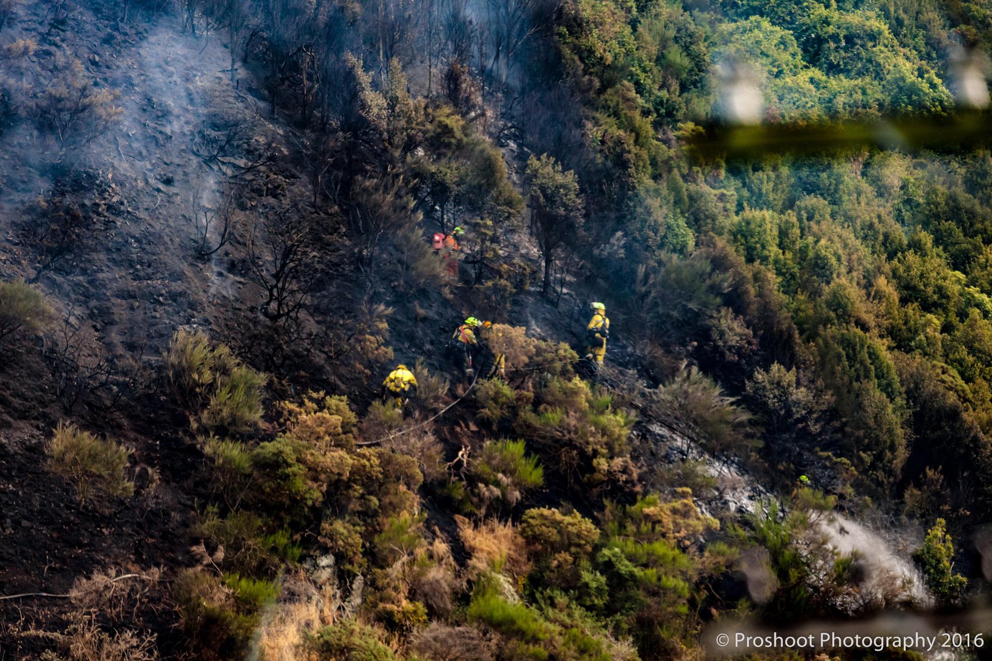 Te Marua Rural Fire 9049