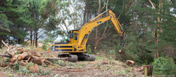 Agricontracts QE2 Tree Felling 6601