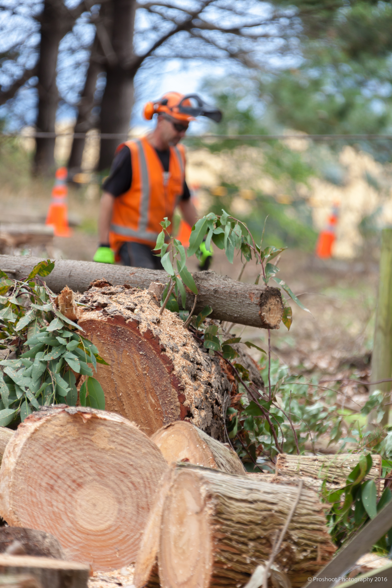 Agricontracts QE2 Tree Felling 6680