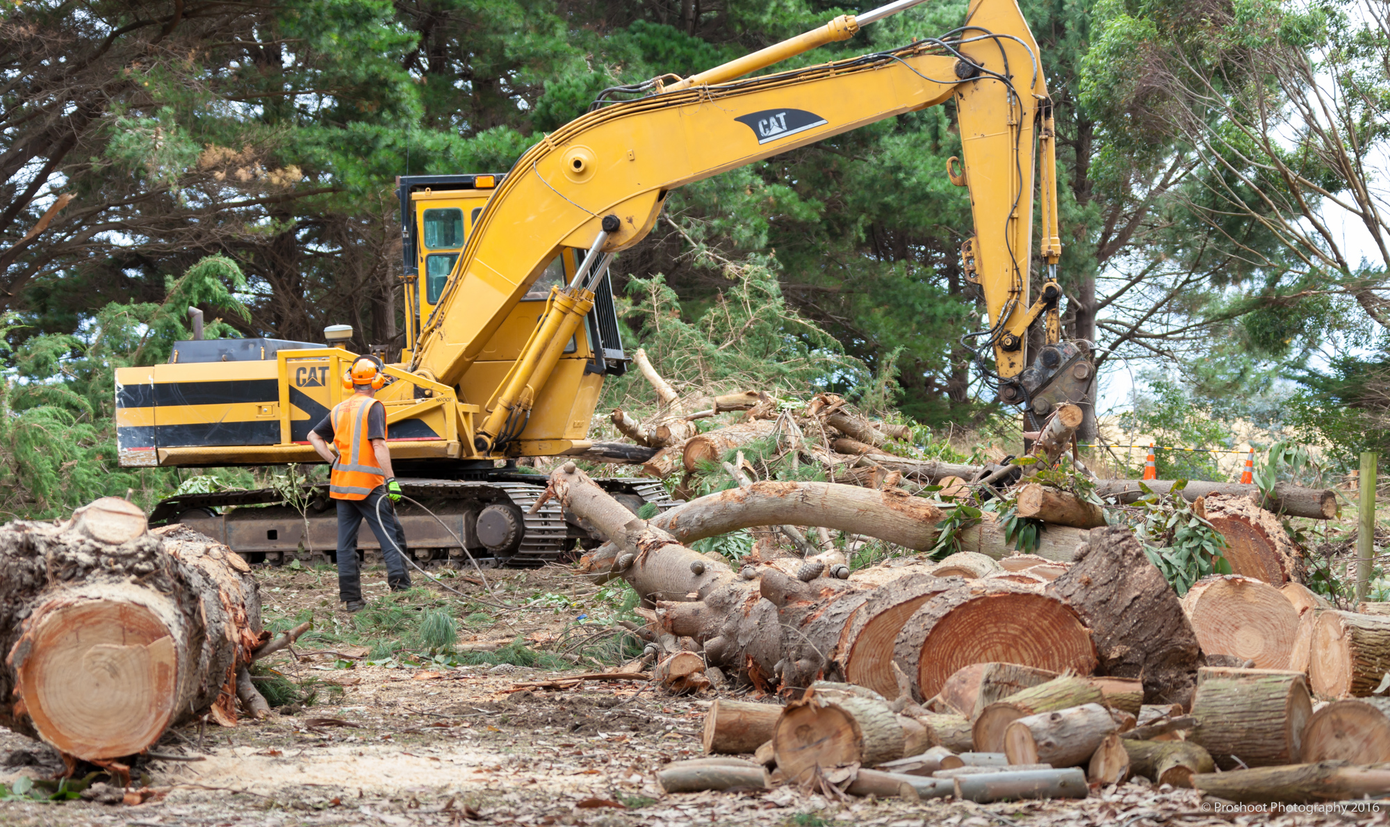 Agricontracts QE2 Tree Felling 6657