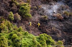 Te Marua Rural Fire 9040