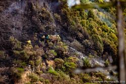 Te Marua Rural Fire 9041