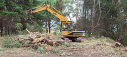 Agricontracts QE2 Tree Felling 6636