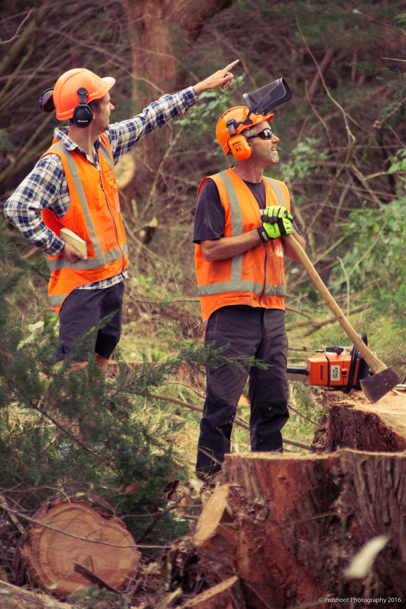 Agricontracts QE2 Tree Felling 6492-4