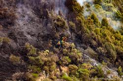 Te Marua Rural Fire 9045