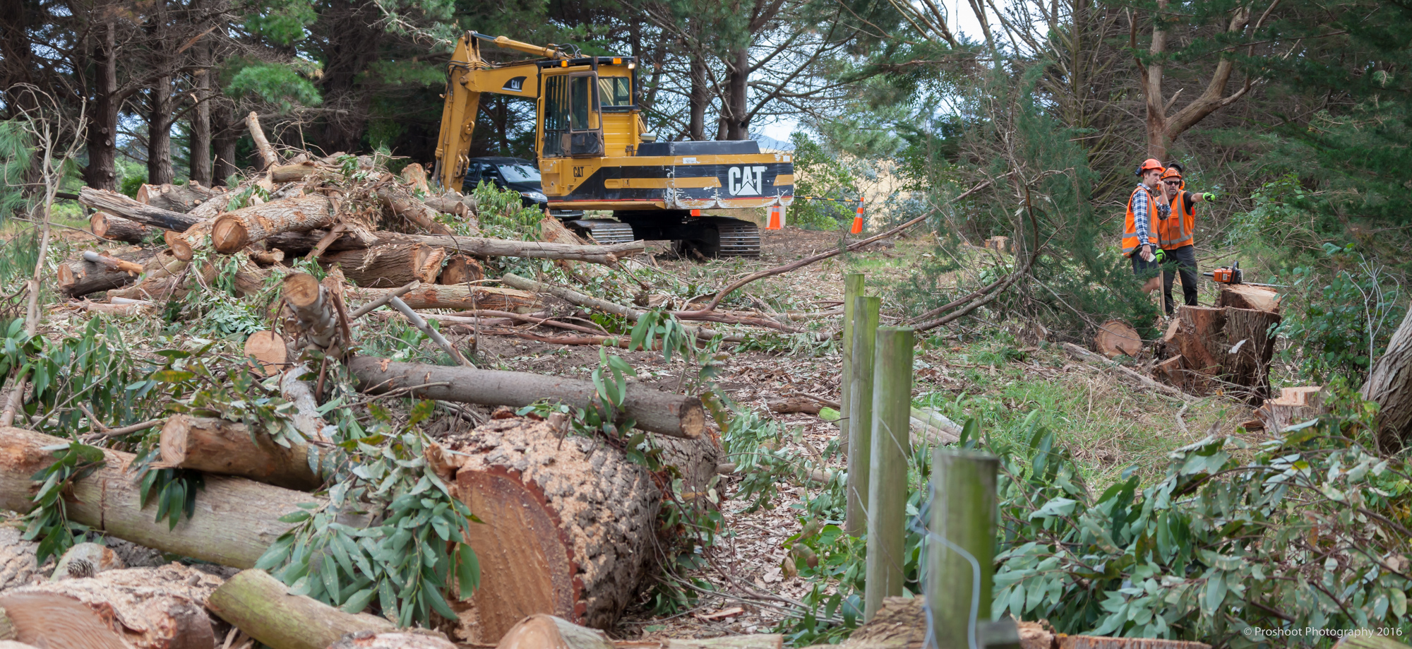 Agricontracts QE2 Tree Felling 6482