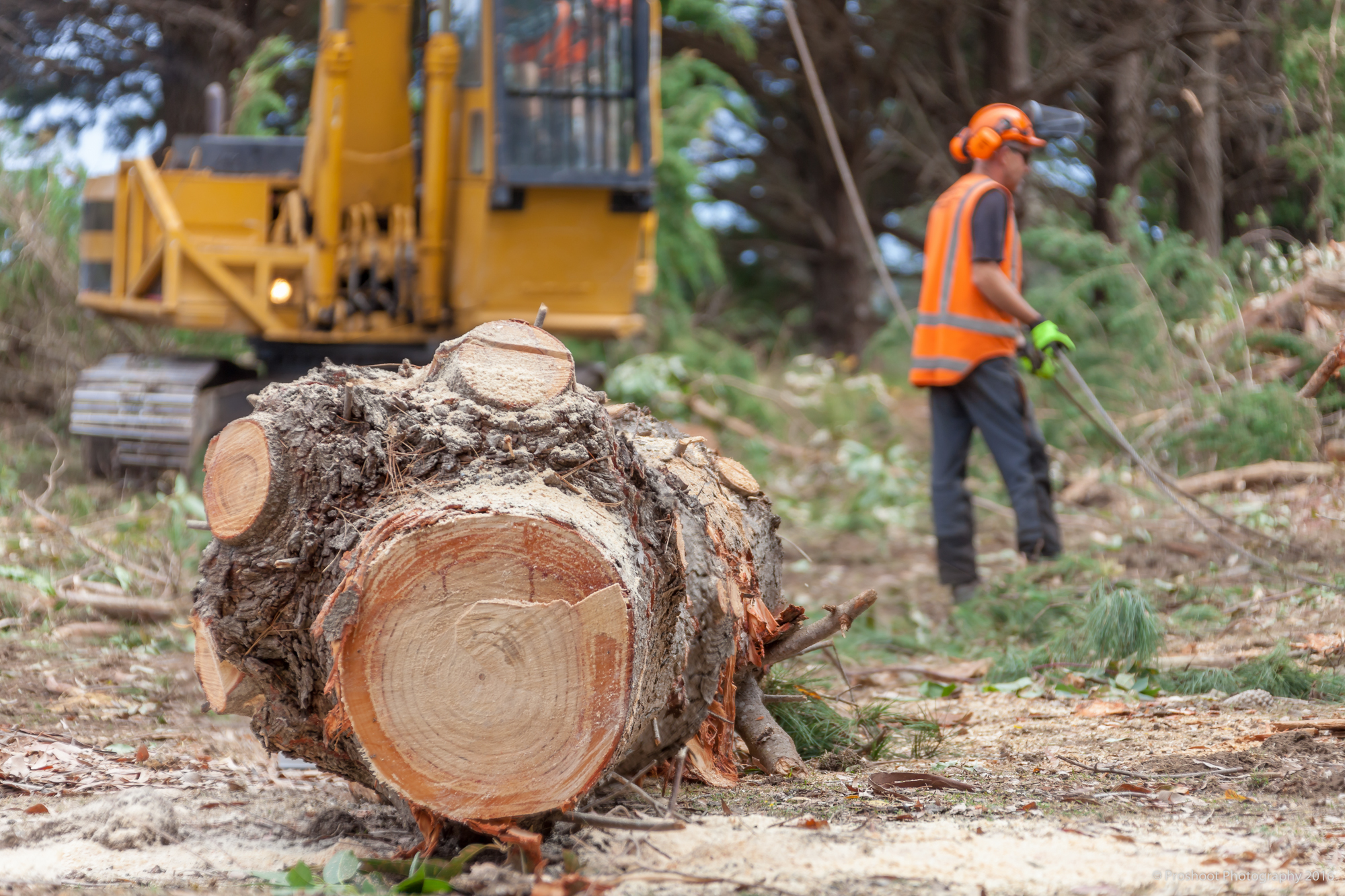 Agricontracts QE2 Tree Felling 6663-Edit