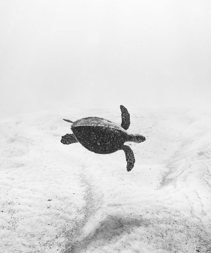 Turtle on the Moon
