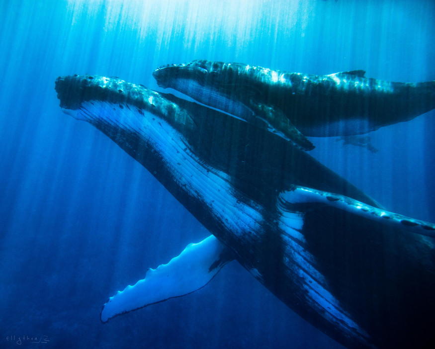 The Whales Song