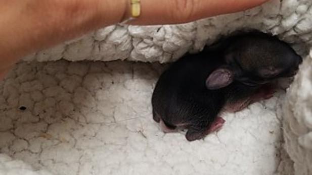 newborn bunny size rescue