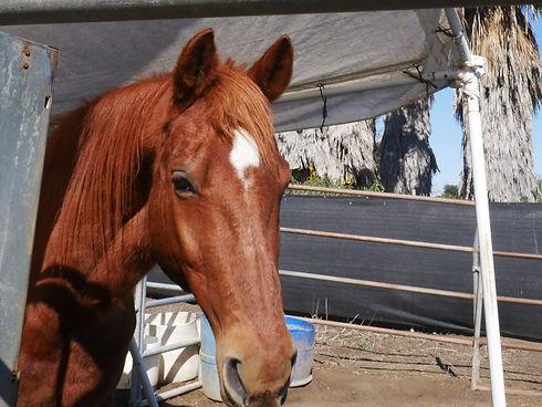 Burt The Riding School Horse Vista.jpg