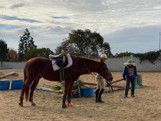 Sitting On The Saddle, I Wept: The Healing Power of Horses