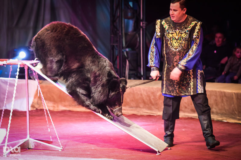 Дрессированные Гималайские медведи