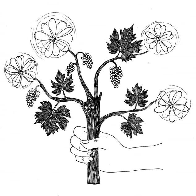 Le bouquet des quatre vents