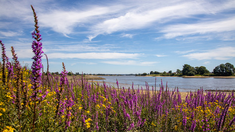 Elbe bei Neuengamme