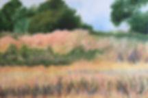 tranquil marsh 1.1.jpeg