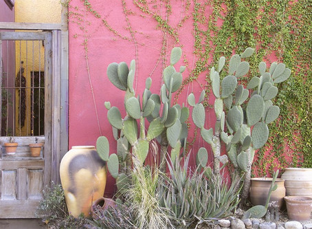 NYT: 36 Hours in Tucson