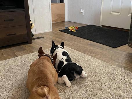 Reggie and Ava