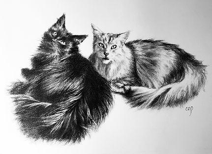 r+j-cat-portrait.jpg