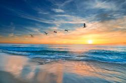 plage oiseaux