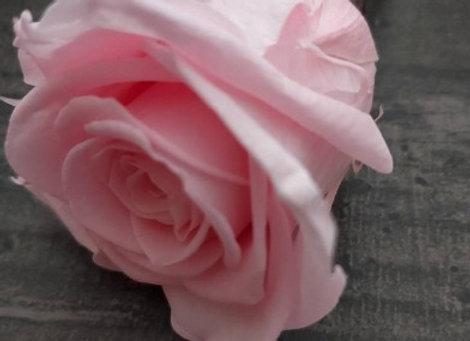 Rose naturelle stabilisée montée sur pic, accessoire  coiffure pour vos mariages