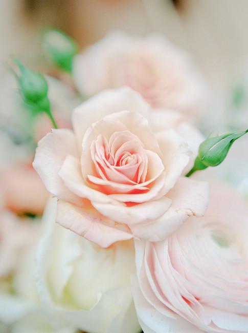 delicate beauty