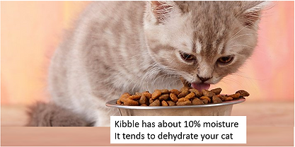 Cats dry food pic.png