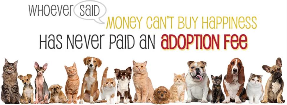 Pet adoption montreal west island dog adoption cat adoption spca animatch