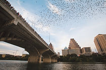 Austin - bats.jpg