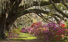 Charleston - Magnolia Plantation.jpg