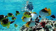 Oahu - Fish.jpg