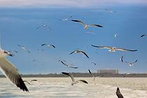 Galveston - Seagulls.jpg