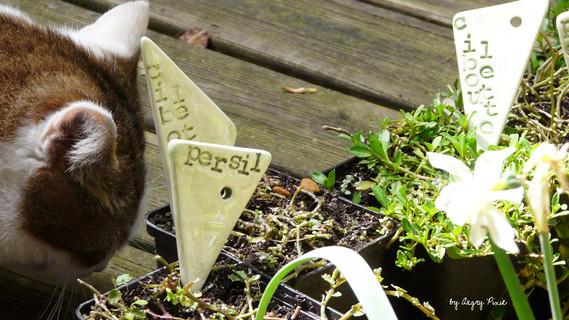 étiquettes à plantations