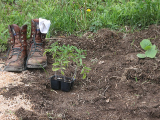 Barefoot in the Garden-and Potlucks?