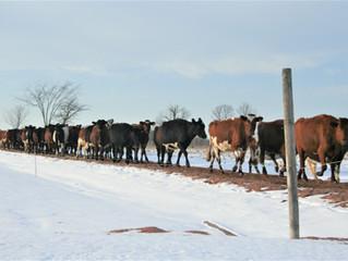 A Winter Walk, a Fresh Perspective