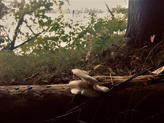 Underfoot, underrated, unappreciated. Fungi.