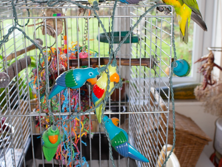 Coco Calling: No. 32 -                                                                  A Parrot's G