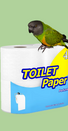 Coco Calling No. 120 - Toilet Rolls and Human Nature
