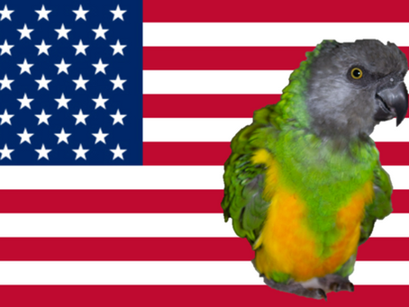 Coco Calling No. 125 - Parrots, Politics and Presidents