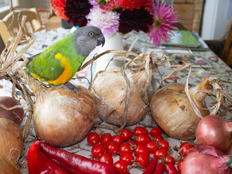 Coco Calling: No. 23 - A Bountiful Harvest