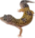 lizard_ Mal PNG4.png