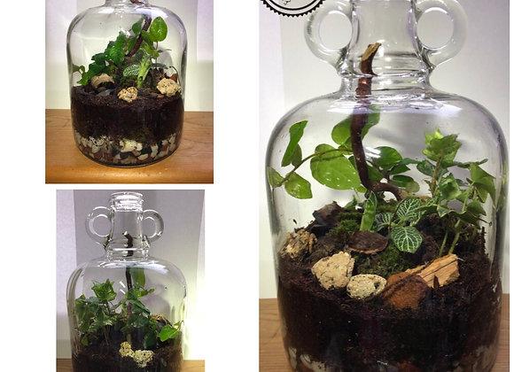 Terrarium in Bottle
