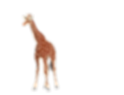 girafffe 2.png