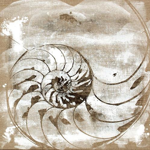 Nautilus in natural