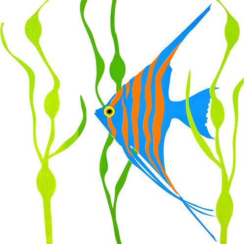 Happy Fish - Longfin
