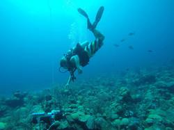 Seaphox Diving.jpg