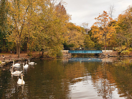 Where to See Fall Foliage Without Leaving the City