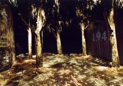 A scene at the eucalyptus grove
