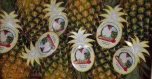Case of Don Bermudez Pineapples
