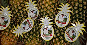 Case of Don Bermudez Pineapples